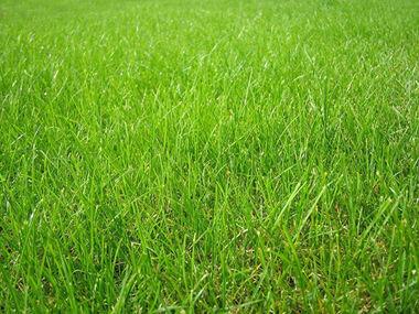 Vente Terrain 1 600m² Orléat (63190) - photo