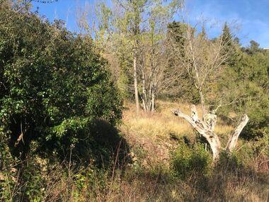 Sale Land Méounes-lès-Montrieux (83136) - photo