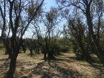 Sale Land Aups (83630) - Photo 1