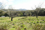 Vente Terrain 2 750m² Maureillas-Las-Illas - Photo 2