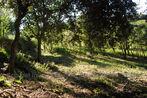 Sale Land 2 500m² Oms (66400) - Photo 4