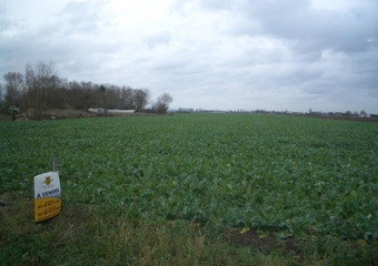 Vente Terrain 1 000m² Vieux-Berquin (59232) - photo