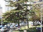 Vente Appartement 2 pièces 40m² Nice - Photo 1