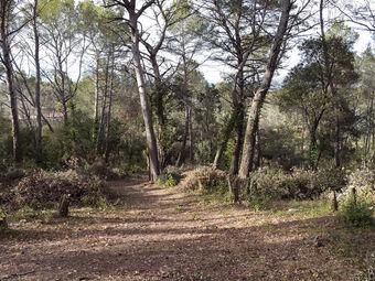Vente Terrain 700m² Trans-en-Provence (83720) - Photo 1
