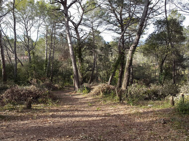 Vente Terrain 700m² Trans-en-Provence (83720) - photo