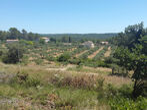 Vente Terrain 720m² Trans-en-Provence (83720) - Photo 2
