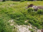 Vente Terrain 400m² Draguignan (83300) - Photo 5