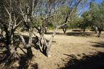 Vente Terrain 638m² Trans-en-Provence (83720) - Photo 3