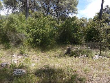 Vente Terrain 863m² Trans-en-Provence (83720) - photo