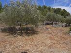 Vente Terrain Trans-en-Provence (83720) - Photo 1