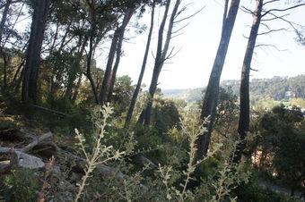 Vente Terrain 1 590m² Trans-en-Provence (83720) - Photo 1