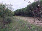 Vente Terrain 1 262m² Le Fenouiller (85800) - Photo 3