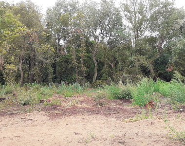 Vente Terrain 400m² SAINT HILAIRE DE RIEZ - photo