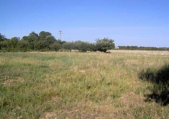Vente Terrain 876m² Cornebarrieu (31700) - photo