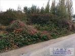 Vente Terrain 2 941m² Quesnoy-le-Montant (80132) - Photo 3