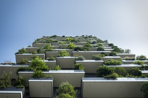 Plantes : est-ce que je peux tout mettre sur mon balcon ?