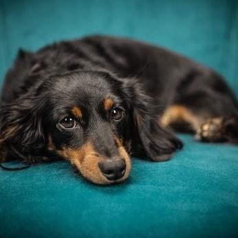 Maison ou appartement : où habiter avec un chien ?