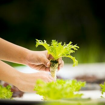 La nouvelle tendance écologique : l'aquaponie
