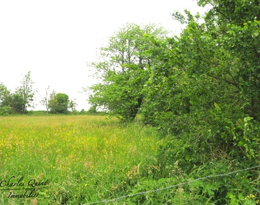 Vente Terrain 1 400m² Wailly-Beaucamp (62170) - photo