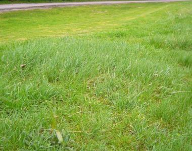 Vente Terrain 2 945m² Bages (66670) - photo