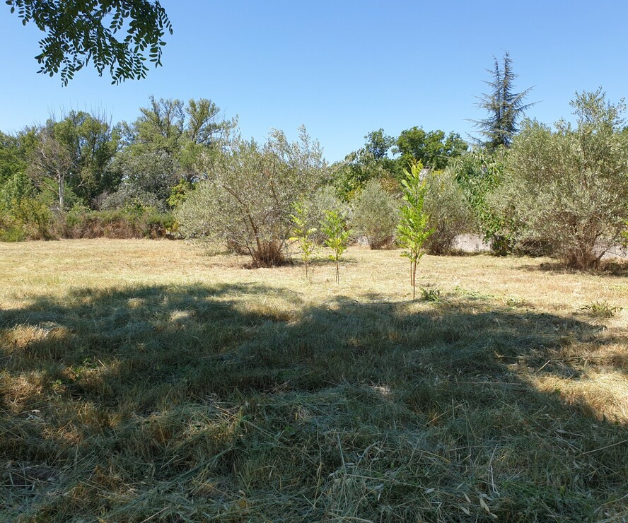 Vente Terrain 1 000m² Saignon (84400) - photo