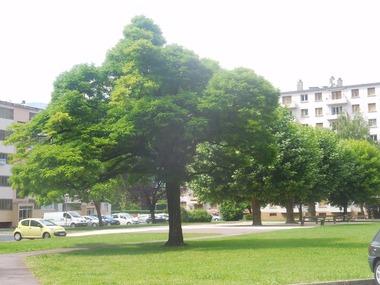Vente Appartement 3 pièces 53m² Domène (38420) - photo