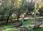 Sale Land 2 229m² ILE DU LEVANT - Photo 4