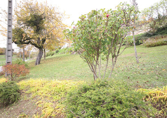 Vente Terrain 800m² Faucigny (74130) - Photo 1