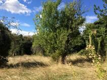 Acheter Terrain  Le Bois-d'Oingt