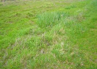 Vente Terrain 2 633m² Bages (66670) - Photo 1
