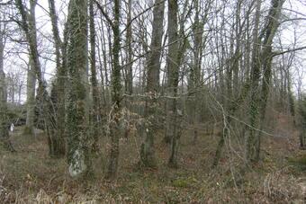 Vente Terrain 886m² 10 mn Sud Egreville - photo