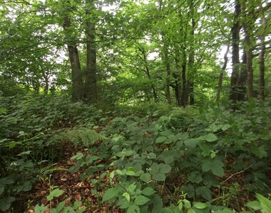 Vente Terrain Boeschepe (59299) - photo