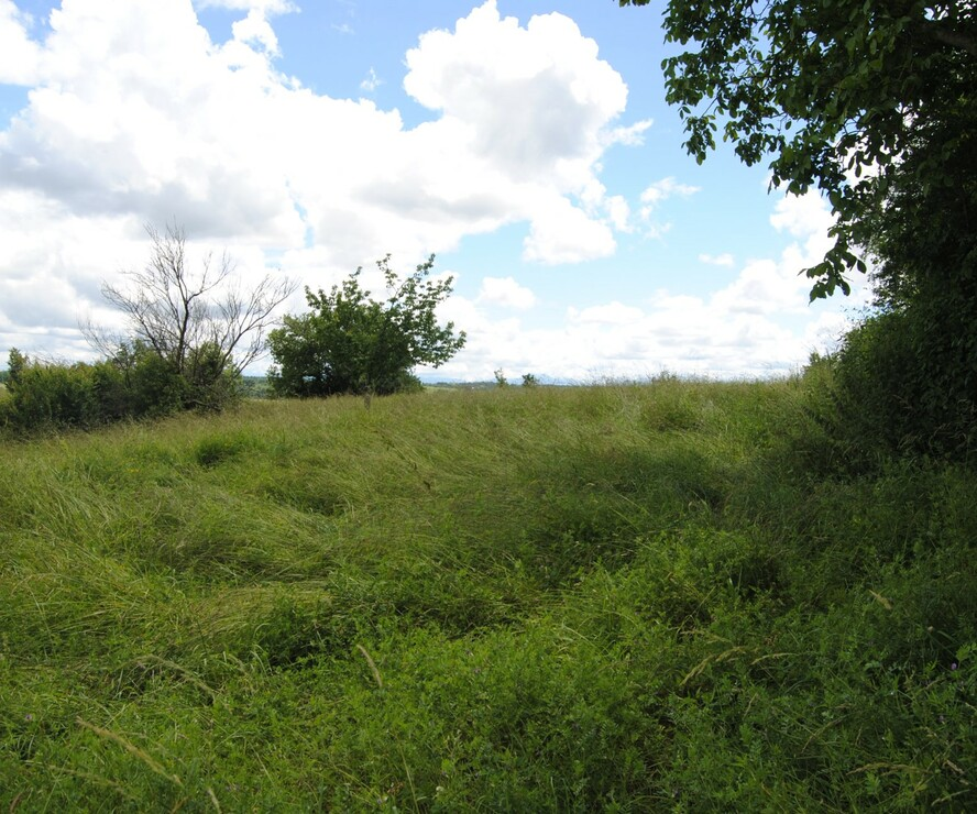 Sale Land 2 009m² L' Isle-en-Dodon (31230) - photo