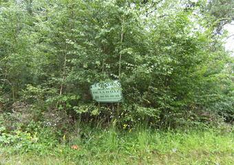Vente Terrain 2 549m² 15 km Sud Egreville - photo