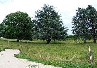 Vente Terrain 2 000m² Cluny (71250) - Photo 1