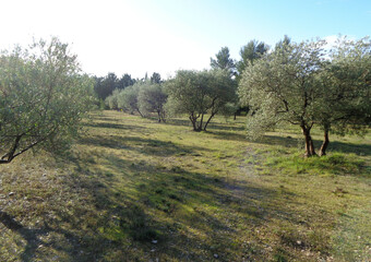 Vente Terrain 999m² Puget (84360) - Photo 1