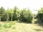 Vente Terrain 440m² La Tremblade (17390) - Photo 3
