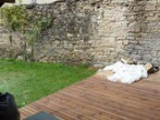 Location Maison 2 pièces 40m² Saint-Alban-de-Roche (38080) - Photo 13