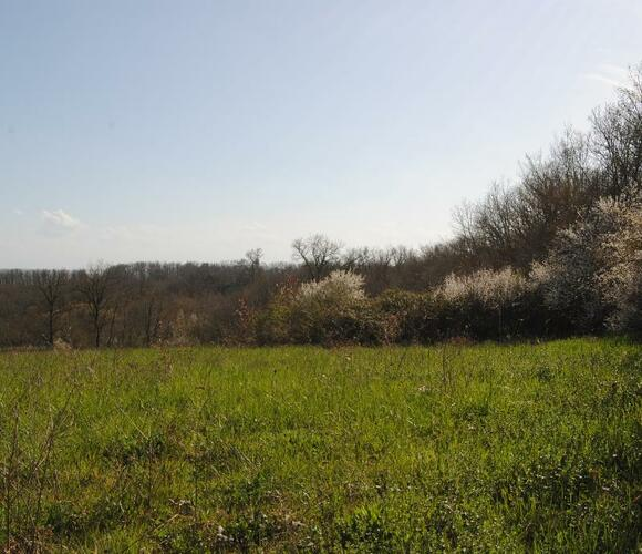 Vente Terrain 1 000m² SECTEUR SAMATAN-LOMBEZ - photo